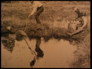 Fiskodling i dammar