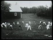 Gymnastiklägret å Ljungbyhed juni – juli 1925