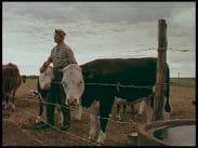 Kalle – bonde trots allt