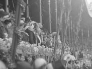Kung Gustaf V 80 år