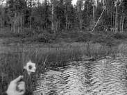 Sommarminnen från Västerbotten 1912