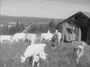 SJ 84 Ångermanland En kortfilm av Ragnar Frisk