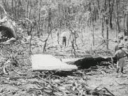 Dag Hammarskjöld UN Archives. 230. Wreckage of Secretary General's Plane, Hammarskjöld's Body (1961)